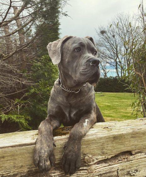 836 - Reggie (Dog)