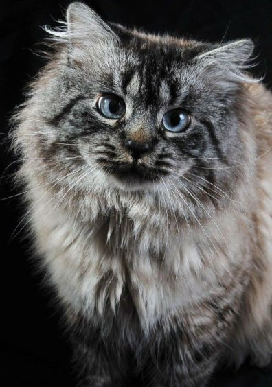 839 - Leo (Cat)