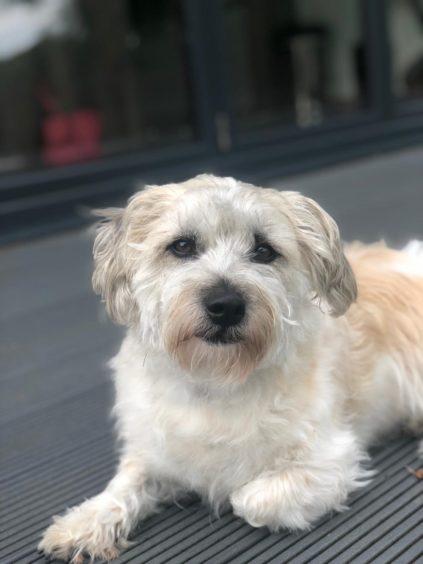 840 - Milo (Dog)