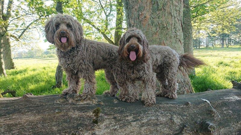 848 - Woody & Ozzy (dog)