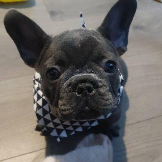 87 - Duke (Dog)