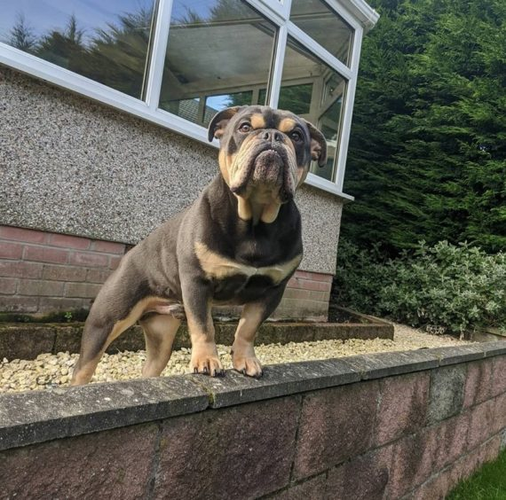 88 - Butch (Dog)