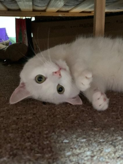 89 - Cassidy (Cat)
