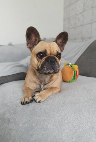 90 - Disco (Dog)