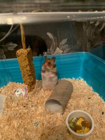 95 - Cookie (Hamster)