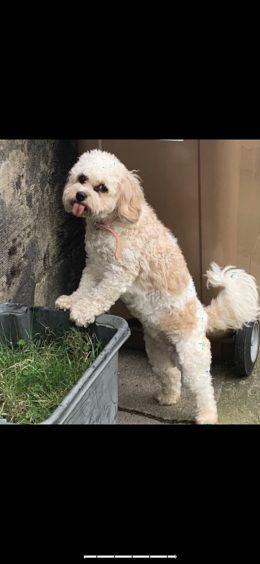 96 - Daisy (Dog)