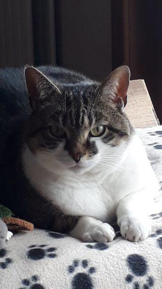 98 - Tilly (Cat)
