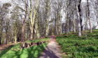 A new path could be created at Caroline's Well Wood in Ellon