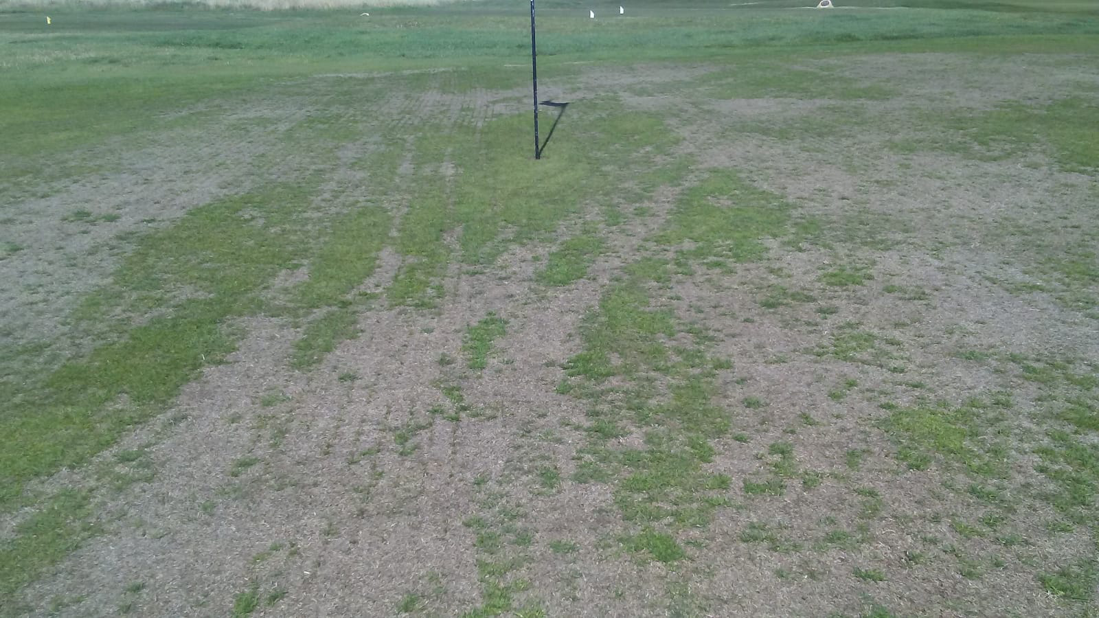 Greens at Kings Links will be ripped up after chemical damage