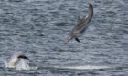 Dolphinwatch is returning to Aberdeen