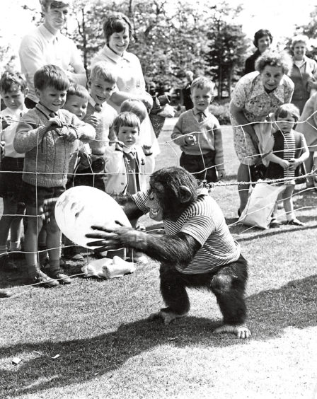 1970: Humphrey the chimp entertains the crowd as he plays with a balloon.