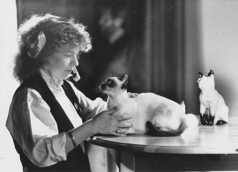 1989: Floor manager at Grampian Television Marlyn Barr tries to settle Lucy the chocolate point Siamese being used in the advert.