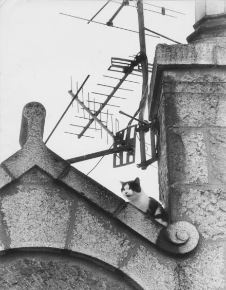 1990: An Aberdeen cat spent a night on the tiles and had to be rescued by firemen at the end of her ordeal. Two-year-old Meggie was stranded on the roof of a four-storey tenement in the city centre yesterday until she was safely brought back to earth.