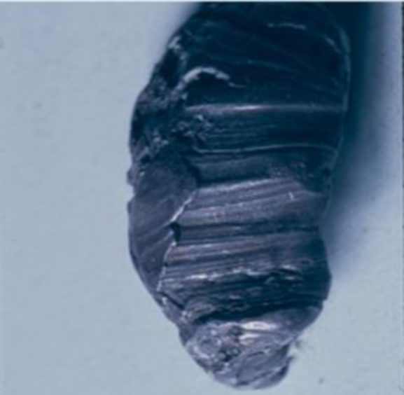 The bullet from the murder weapon.