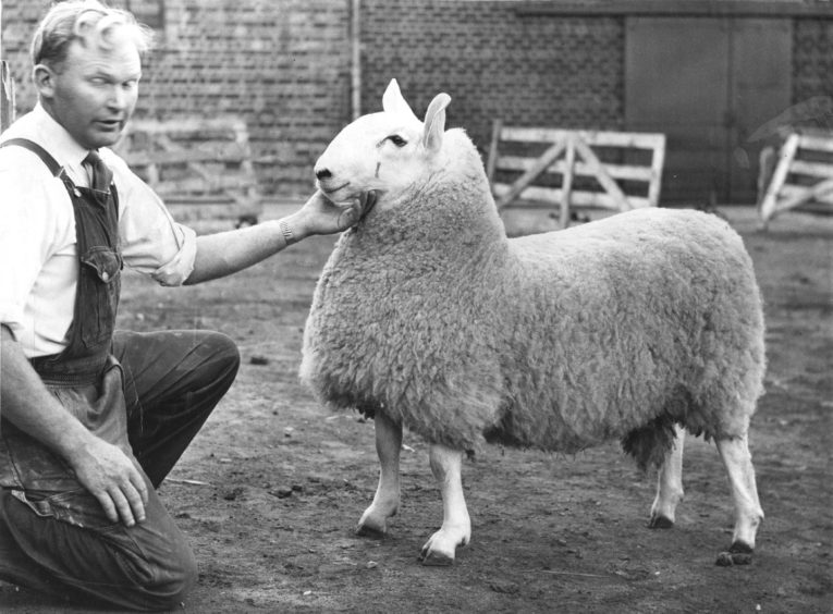 1966: Sandy Lee, jun., Fordafourie, Fraserburgh, holding the Border Leicester champion ram lamb at the Aberdeen Show, held at the Central Mart yesterday.