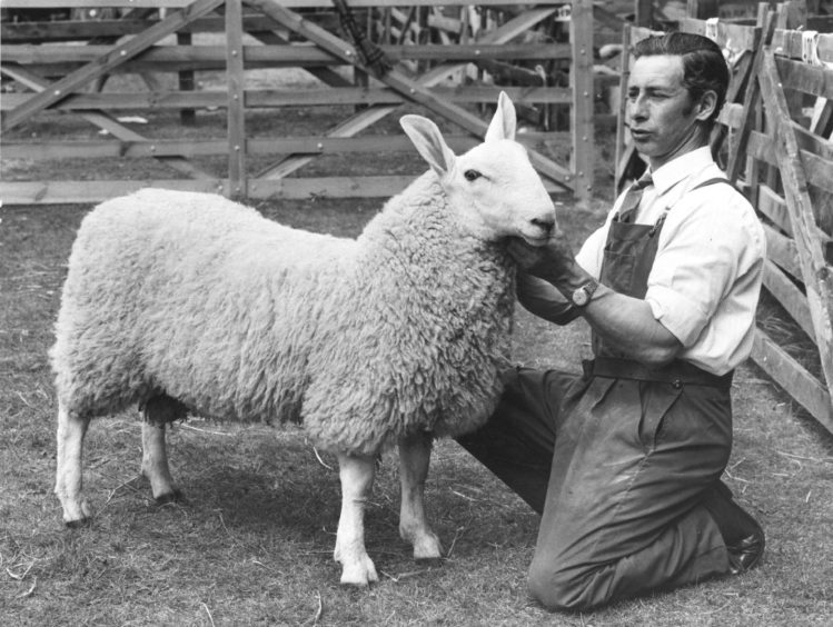 1974: The Border Leicester ram which took the champion award at Banchory