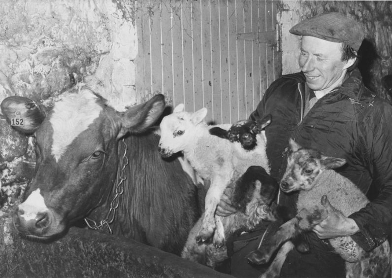 1979: An armful of mischief The missing lamb manages to get into this picture the head can just be seen peeping over the white lamb. Holding the three newcomers is Mr Anderson.