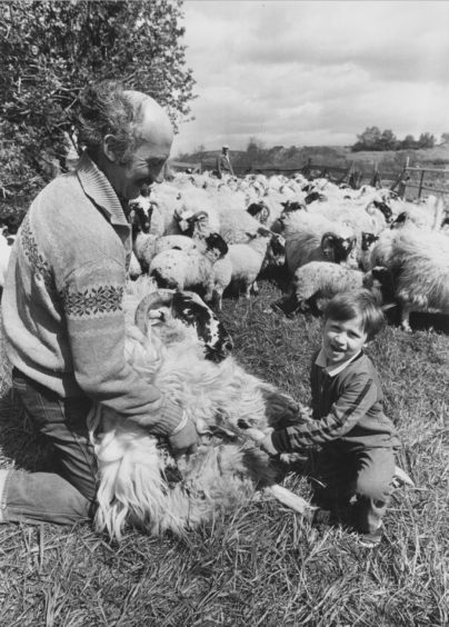 1989: Checking the sheep's feet is farmer Mr Hector Milne and his son, Euan, on their farm at Mill of Blairydrine, Durris.