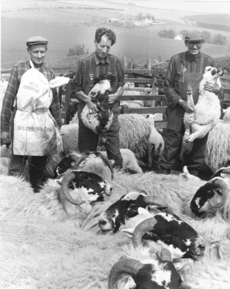 1992: Drenching their Blackface ewes and lambs at Skares farm, near Huntly, are (from left) brothers Alexander, Frank and Bob Massie.