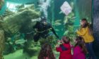 To go with story by David Proctor. The annual TechFest festival of STEM is back with an online twist. The new digital version will launch at Macduff Marine Aquarium on Thursday 5 November, and will give the audience the chance to virtually submerge themselves in marine science and learn all about this mysterious underwater habitat. Picture shows; A dive event at Macduff Aquarium. Macduff, Aberdeenshire. Supplied by Macduff Aquarium  Date; Unknown