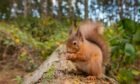 Countryside rangers have urged visitors to stop leaving food for squirrels.