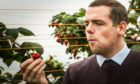 Douglas Ross on a visit to East Seaton Farm, Arbroath.