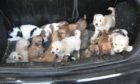 The Scottish SPCA is calling for people to sign up to its Assured Puppy Breeders Scheme