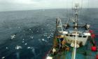 Scottish fish producers