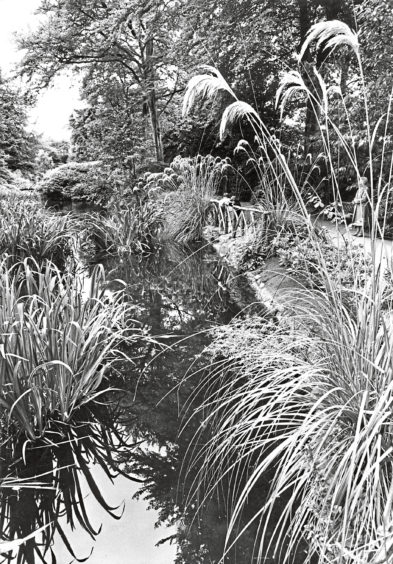 1981: The beauty of the gardens is enhanced by the tall grass which overhangs the water, drawing an admiring look from a visitor.