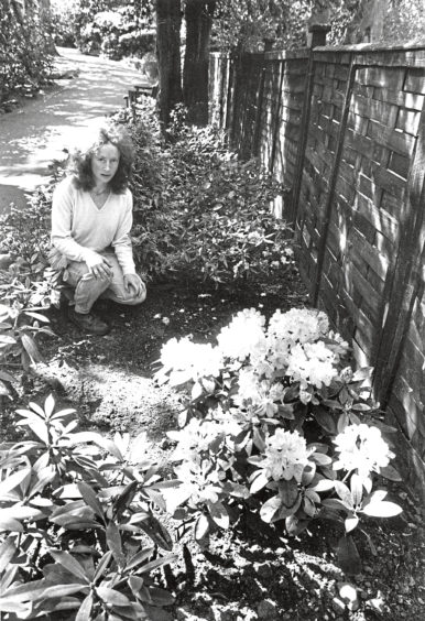 1989: Iris Walker, gardener in charge at Johnston Gardens look at the gap between the rhododendron bushes where one was stolen by vandals.