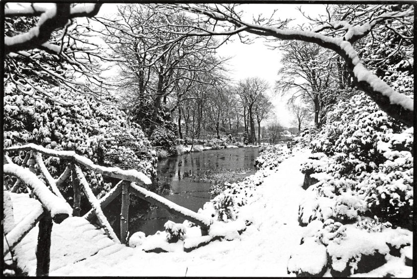 1986: The snowfall of the last two days has cast a magic spell on Johnston Gardens in the west end of Aberdeen. Bustling traffic may have turned the snow into slush on the streets  but this quiet park has been transformed into a winter wonderland.
