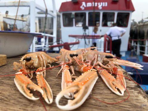 Amity Fish Company is run by Peterhead-based Skipper Jimmy Buchan