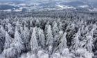Ice rain, frozen fog and snow sit on the trees in the Taunus region near Frankfurt, Germany.