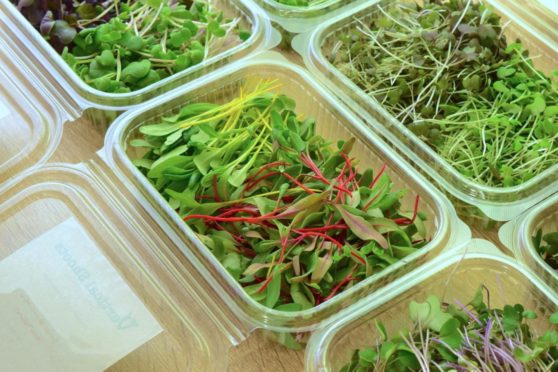 Vertical Shoots Urban Farms produces an array of microgreens in Westhill, Aberdeenshire