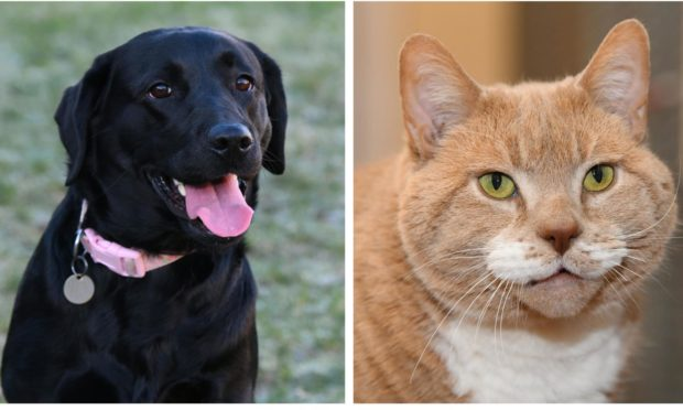 Locals are encouraged to send Valentine's Day cards to cats and dogs