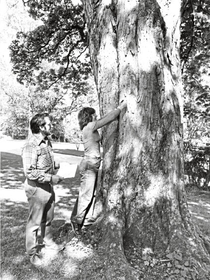 1981: Ranger Pipes helps Mrs Margaret Aust of Grampian Orienteers to put up markers for a new wayfaring course.