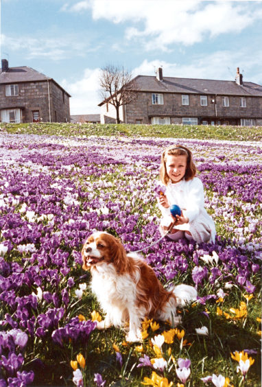 1991 - Pretty Jillian Sim, from Edinburgh, was on holiday visiting her grandparents Betty and Ian Thomson, of Garden Crescent, Aberdeen, when their dog Pepper led her astray into the flower beds at Kincorth  but, although Pepper was quite happy to have a seat there, Jillian decided I was not really a good place to roll her Easter egg.  Herald 20.03.1991
