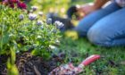 We highlight top gardening tasks for this month.