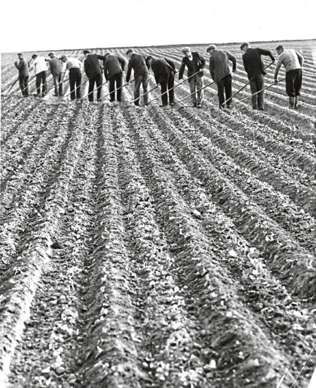 1955 - A line of people work the field together near Inverurie