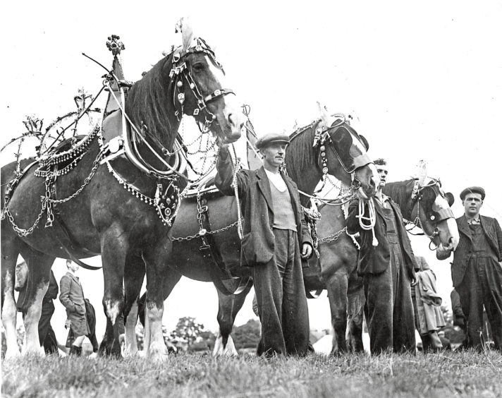 1930s - Horses adorned with fancy harnesses and other tack draw admirers in this farming scene