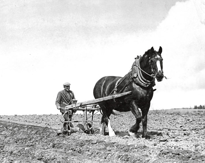 1955 - Charles Brodie works the fields with his horse sowing neeps at Annesley, Torphins, on a fine spring day