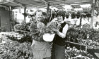 1985: In the plant house, manager Marion Frewing and plant house manager Jimmy McRae prepare a hanging basket assortment for a customer, against a backdrop of hundreds of bedding plants.