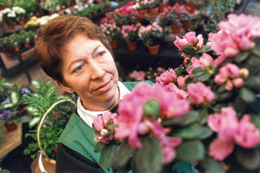 1992: House plants assistant Kathleen Fraser casts an expert eye on some azaleas.