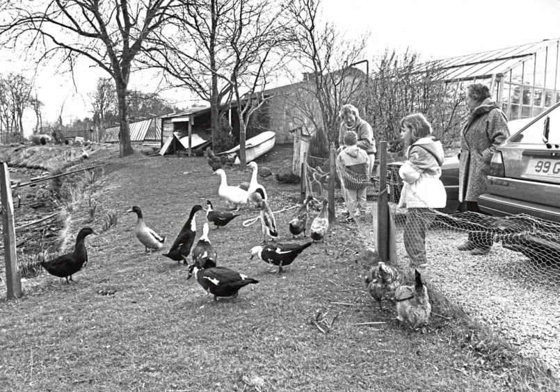 1987: The ducks are always eager for a spare crumb and a great favourite with children at Findlay Clark's Garden Centre.