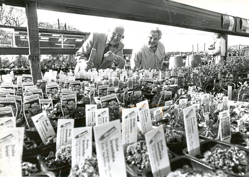 1988: Mr and Mrs George and Gladys Leiper, Aberdeen, choose from the selection of plants on offer at Findlay Clark.