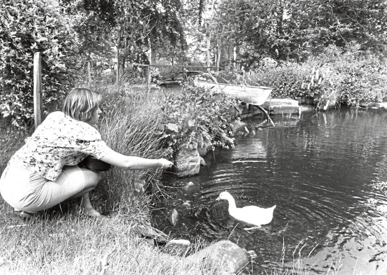 1989: Secretary Alice Combe at the ornamental pond where feeding the ducks has become a major attraction.