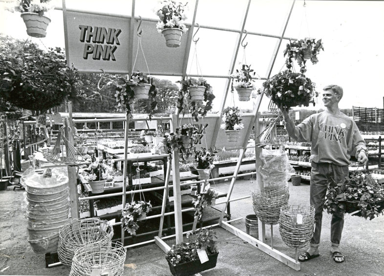 1988: Findlay Clark Garden Centre manager Kenneth Mitchell arranging the eye catching Think Pink display in the outdoor section.