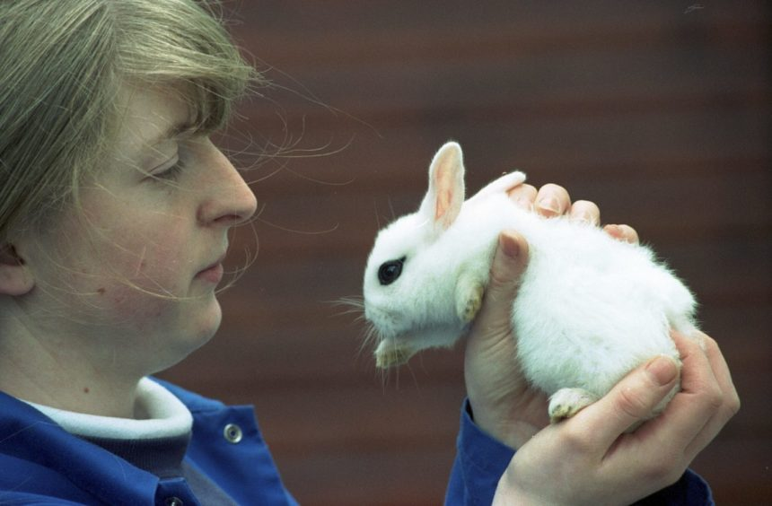 1997 - Alison Fyfe handling a rabbit at Hazlehead Pets Corner. Alison is studying for her 1 year National Certificate in Small Animal Care at Aberdeen College.