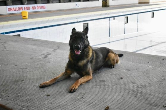 PD Ice of the Aberdeen Police Dog Unit beside the empty pool at Bon Accord Baths.