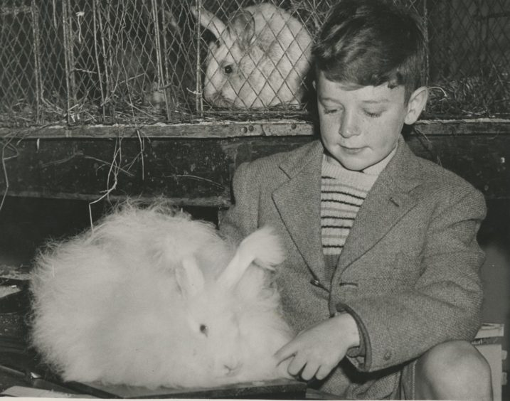 1961 - Brian Stables, Fife-Keith, with his prize-winning angora rabbit at the Aberdeen Fur and Feather Show held in the Music Hall.